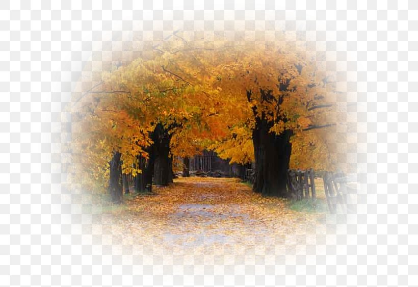Desktop Wallpaper Autumn Season Png 681x563px Autumn Android Directory Display Resolution Landscape Download Free