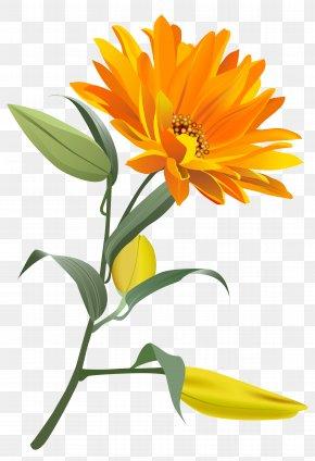 Orange Flower Clip Art Image - Flower Clip Art PNG