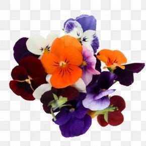 Violet - Pansy Floral Design Violet Cut Flowers Annual Plant PNG