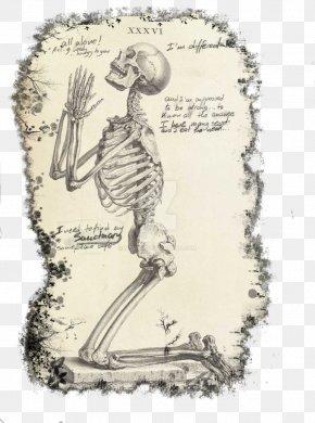 Skeleton - Praying Hands Prayer Human Skeleton The Anatomy Of The Human Body PNG