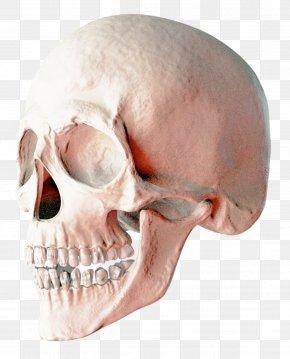 Skull - Skull Brighton Ski Resort PNG