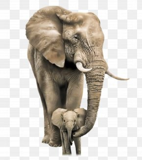 Elephant - African Bush Elephant Mother Infant Child PNG
