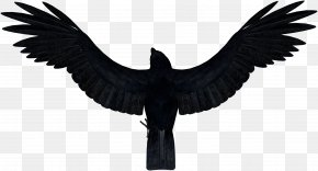Crow - Bird Common Raven Carrion Crow PNG