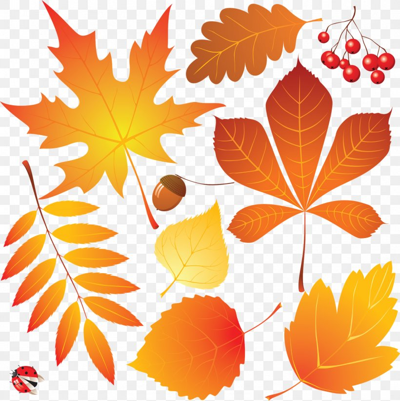 Autumn Leaves Drawing, PNG, 1596x1600px, Autumn Leaves, Art ...