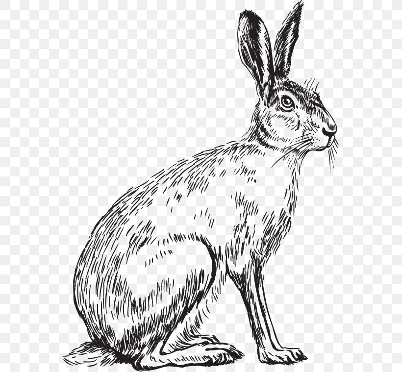 Domestic Rabbit Hare Whiskers Dog Sketch, PNG, 800x759px, Domestic Rabbit, Animal, Artwork, Black And White, Canidae Download Free