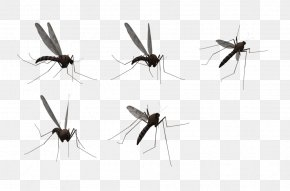 Mosquitos - Mosquito Clip Art PNG
