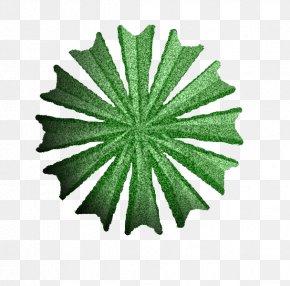 Tree Plan - Leaf Tree PNG