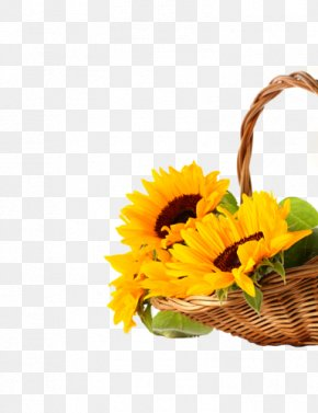 desktop wallpaper common sunflower high definition television 1080p high definition video png favpng