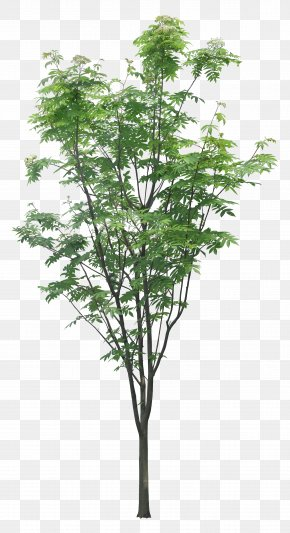 Luxuriant Trees - Tree Layers Branch PNG