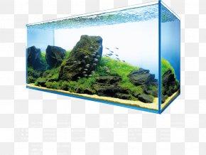 Aquarium Lighting Aquatic Plants Aquascaping Aquariums PNG