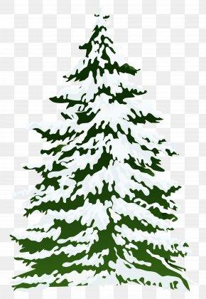 Winter Snowy Pine Tree Clipart Image - Pine Snow Tree Clip Art PNG