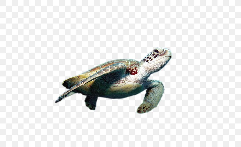 World Turtle Day Cheloniidae Green Sea Turtle Tortoise, PNG, 500x500px, Turtle, Animal, Cheloniidae, Chelydridae, Emydidae Download Free