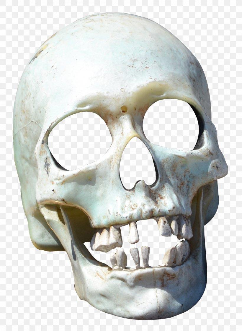 Skull Transparency And Translucency, PNG, 1100x1503px, Skull, Bone, Digital Image, Gimp, Head Download Free