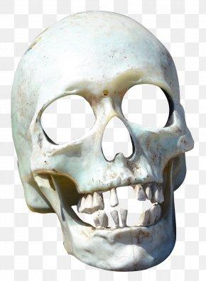 Skull - Skull Transparency And Translucency PNG