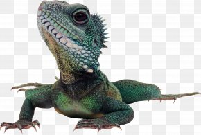Lizard - Lizard Komodo Dragon Reptile Green Iguana PNG