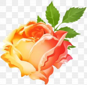Yellow Orange Rose Clip Art Image - Garden Roses Purple Centifolia Roses Clip Art PNG