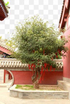 Corner Temple Trees - Lam Tsuen Wishing Trees Temple PNG