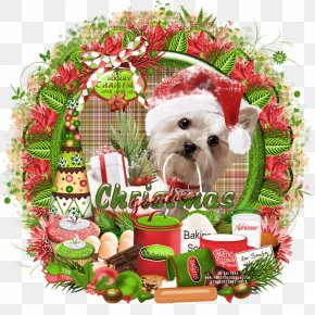 Puppy - Dog Breed Shih Tzu Puppy Companion Dog Christmas Ornament PNG