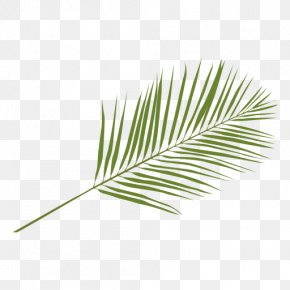 Leaf - Arecaceae Leaf Palm Branch Areca Palm PNG