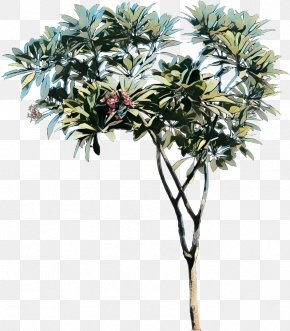 Asian Palmyra Palm Tree Red Frangipani Plant Science Shrub PNG