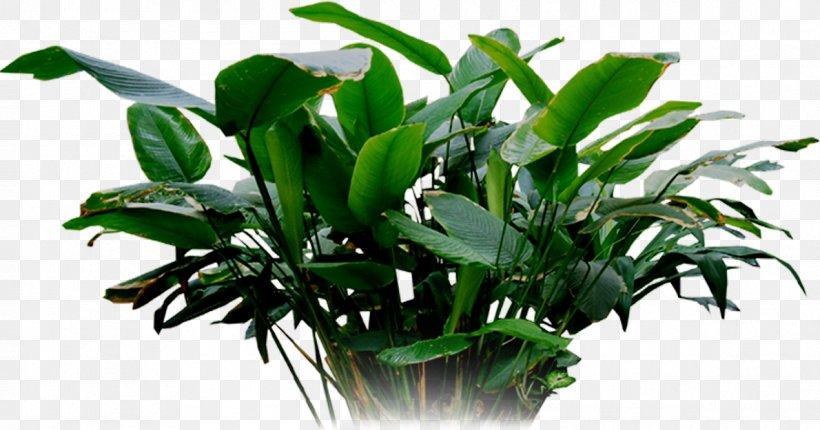 Leaf Tree Branch Shrub Lawn, PNG, 1190x625px, Leaf, Anthurium, Botany, Branch, Dendrobium Download Free