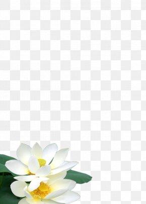 Noble Lotus - Petal Floral Design Campus Pattern PNG