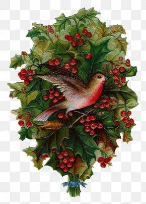 Christmas Tree - Christmas Day Clip Art Christmas Christmas Tree A Christmas Carol Santa Claus PNG