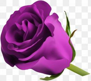 Purple Rose Clip Art Image - Blue Rose Flower Clip Art PNG