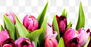 Tulip - International Women's Day Share Net D Holiday Woman PNG