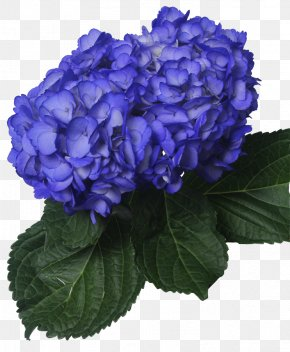 Dark Blue Flower - Hydrangea Navy Blue Flower Clip Art PNG