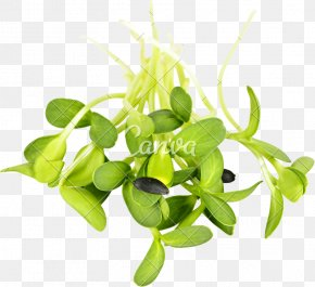 Sunflower Leaf - Raw Foodism Organic Food Sprouting Common Sunflower Sunflower Seed PNG