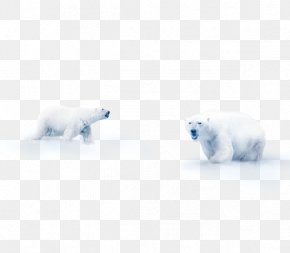 Snow Polar Bear - Polar Bear Snow Flooring Mammal PNG