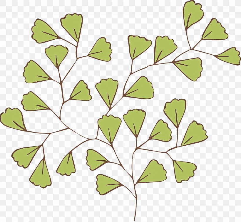 Leaf Green Branch Plant Tree, PNG, 3000x2768px, Leaf, Branch, Flower, Green, Plant Download Free