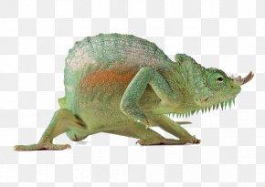 Animals Chameleon - Lizard Reptile Chameleons PNG