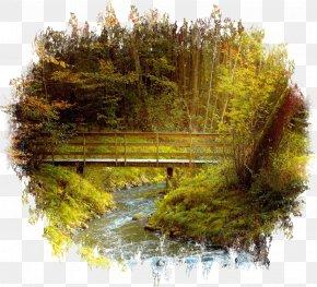 Landscape - Plant Trees Bridge Forest Desktop Wallpaper Jungle PNG