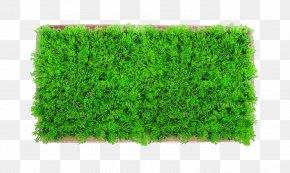 Tree Top View - Lawn Aquatic Plants Artificial Turf Aquarium PNG