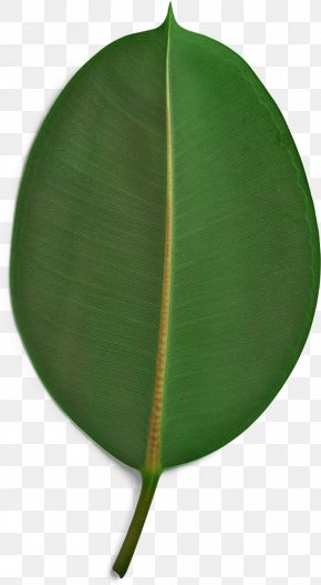 Green Palm Leaves - Sustainability Paper Sustainable Development Poster Kruger Products PNG