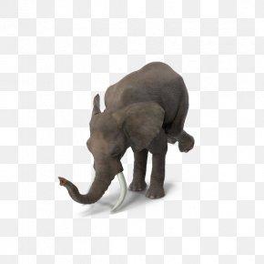 Elephant Circus Stunt - Circus Indian Elephant PNG