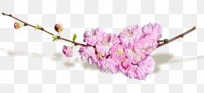 Spring Flowers - Cut Flowers Blog PNG