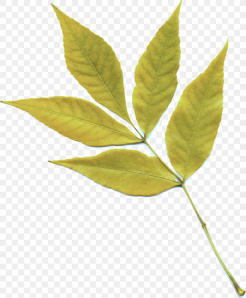 Leaf Plant Flower Tree Flowering Plant, PNG, 1054x1280px, Leaf, Flower, Flowering Plant, Plant, Plant Stem Download Free