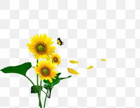 Sunflower - Butterfly Common Sunflower Gratis Computer File PNG