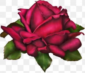 Rose Art - Friendship Falling In Love Mother PNG