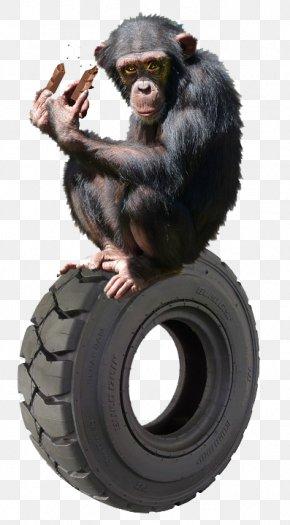 Monkey - Common Chimpanzee Gorilla Primate Orangutan Gibbon PNG