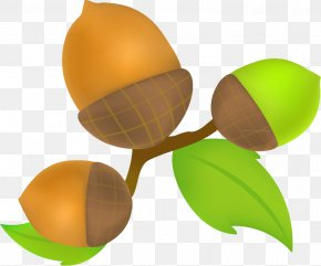 Cartoon Kiwi Decoration - Kiwifruit Oyumino Cartoon PNG