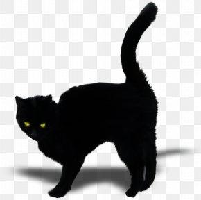 Black Cat - Bombay Cat Black Cat Kitten Domestic Short-haired Cat Whiskers PNG