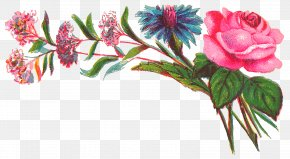 Flowering Plant Pink - Flower Plant Cut Flowers Pink Flowering Plant PNG