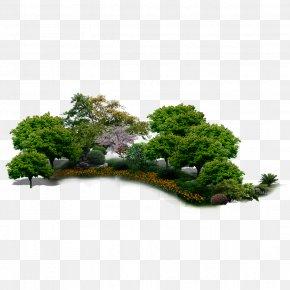 Garden,rockery,Trees,Flowers - Environment Tree PNG