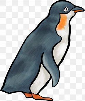 Penguin - Penguin Flightless Bird Animal PNG