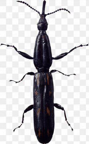Bug Image - Insect Clip Art PNG