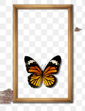 Butterfly Frame - Butterfly Picture Frame Computer File PNG